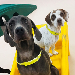 Two dogs enjoying dog daycare at Care-A-Lot Pet Resorts