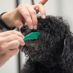 Dog grooming and teeth brushing in Virginia Beach