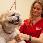 Happy dog with dog groomer at Care-a-lot pet resorts in Virginia Beach